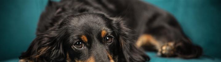 寵物經濟迎來爆發,垂直渠道的機會在哪里?