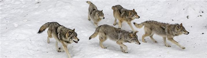 如何帶出狼一樣的團隊?